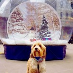 Christmas Giant Snow Globe Hire