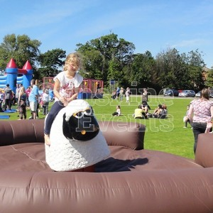 Rodeo Sheep for Events and Parties