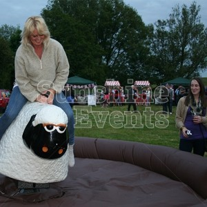 Rodeo Sheep for Corporate Events