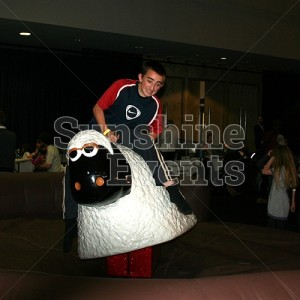 Rodeo Sheep for Indoor Events and Parties