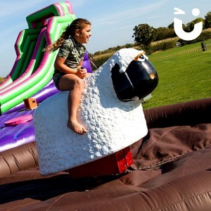 Rodeo Sheep Hire for Entertainment