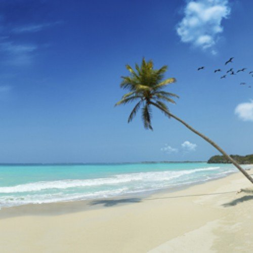 Backdrop - Tropical Beach