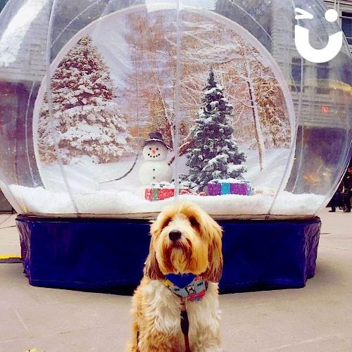 Christmas Carousel 1